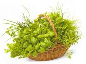 Зелень. Как сохранить зелень на зиму?