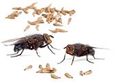 Вредные насекомые и грызуны
